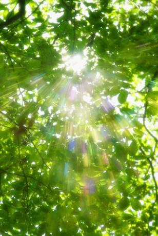 「光の写真展」2008年12月6日(土)~14日(日)